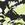 Black And Lime Floral Print Leggings